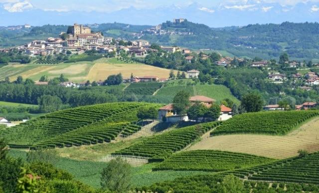 ピエモンテワインの魅力【イタリア周遊記 Part1】